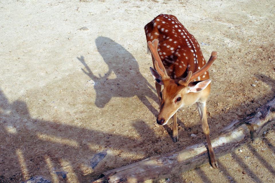 http://www.flickr.com/photos/kkirugi/4923020487/